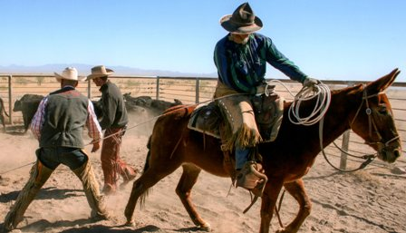 Donkey Races And Mule Rodeo In Fort Davis This Weekend