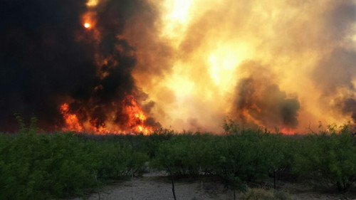 Flames overtake rugged lands in south Presidio County near the Texas towns of Ruidosa and Candelaria (Oscar Moreno)