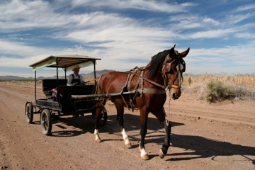 A Mennonite man drives a horse and buggy near Ciudad Cuauhtémoc. (Lorne Matalon/KRTS)