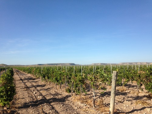 the biggest winery in texas thrives in the desert krts 93 5 fm