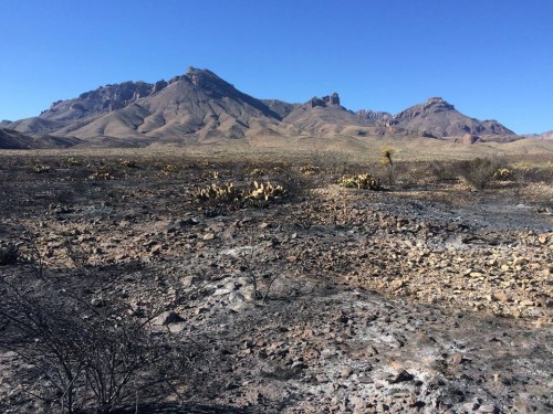 """Parts of the burn area from the """"Powerline Fire"""" in Big Bend National Park, which was fully contained on Friday, February 5, 2016. (Big Bend National Park)"""