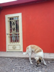 Homes are being remodeled and freshly painted one year after the Boquillas crossing was opened. (Travis Bubenik/KRTS)