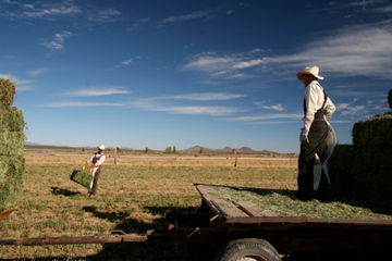 A Mennonite father and son at work in a field near Casas Grandes, Chihuahua. (Lorne Matalon/KRTS)