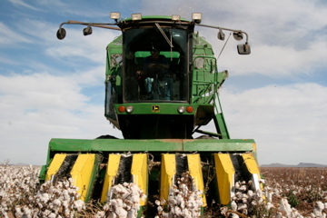A man drives a cotton harvester on a Mennonite farm near Lopez Mateos, Chihuahua. (Lorne Matalon/KRTS)