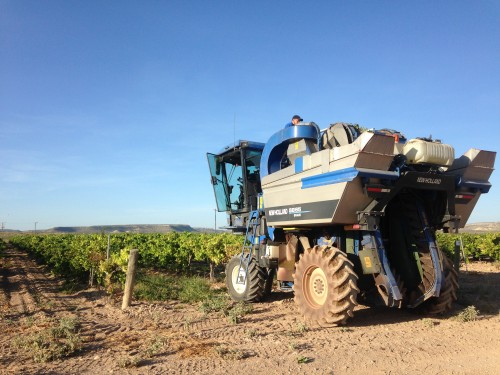 No mom-and-pop operation: tractors scoop up grapes from the vines and truck them to a 70,000 square foot winery nearby. (Travis Bubenik / KRTS)